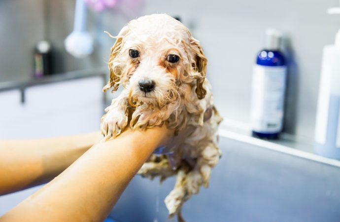 5 Best Baby Shampoo for Dogs