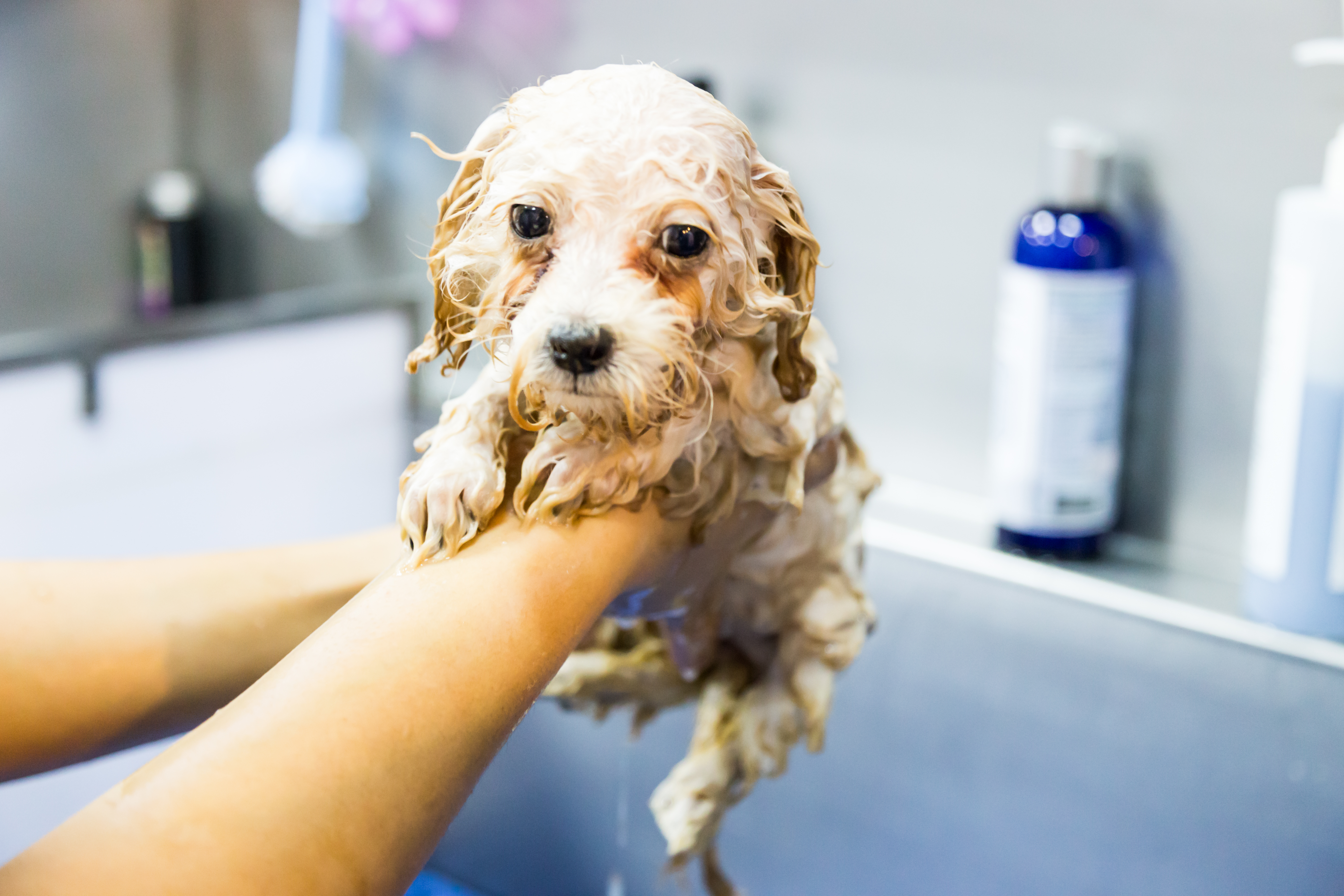 5 Best Baby Shampoo For Dogs Topthingy