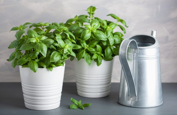 3 Ways to Grow an Herb Garden in your Apartment