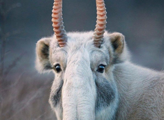 10 Weird Animals Most People Don't Know Exist