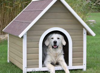4 Best Dog Houses For the Winter Season