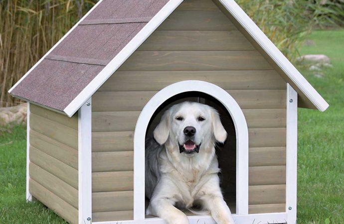 4 Best Dog Houses For the Winter Season