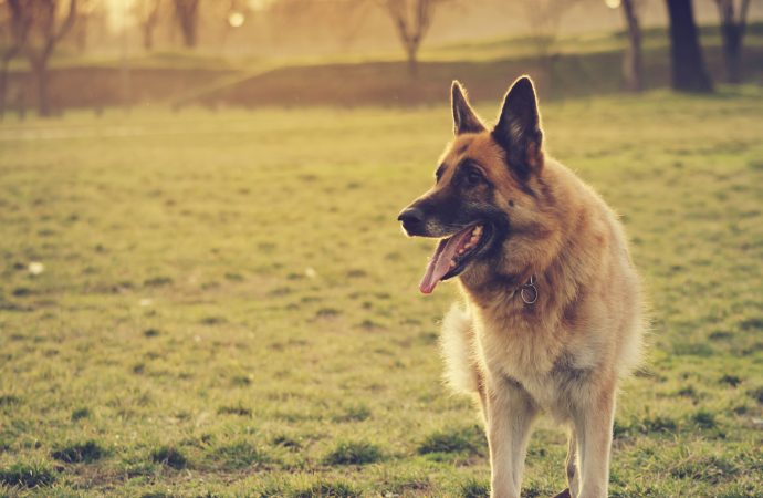 5 Most Popular Dog Breeds and Their Origins
