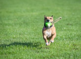 Top 8 Squeaky Dog Toys That Won't Annoy You