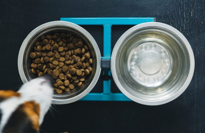 3 Things to Consider About Raw Dog Food Diets